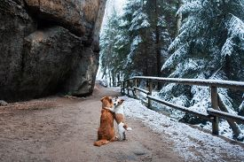 Dog Hugging. Pets In Nature In Winter. Cute Animals Are Friends. Small And Big Dog Together. Toller