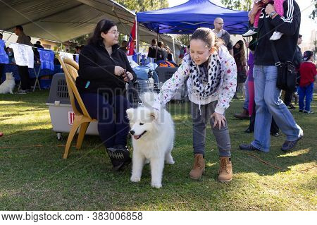 Acre, Israel, January 3, 2016 : A Girl Strokes A White Puppy At A Dog Festival Competition In The Ci