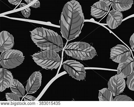 Repeated Spring Peony Wallpaper. Summer Textile Design. Monochrome And Greyscale Romantic Botanical