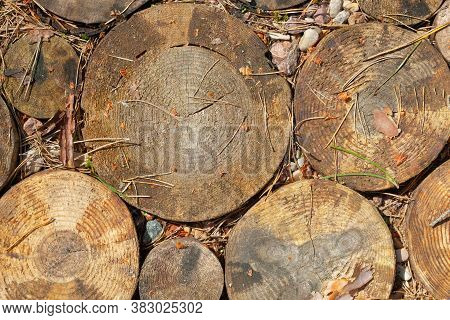 Cross Section Of Tree Trunks Background. Decoration Of Cutting Tree. Cutting Tree Trunks Placed Toge