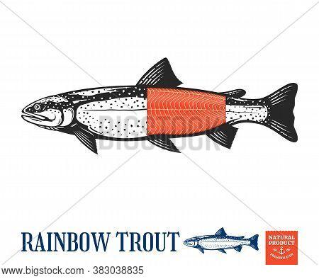 Vector Trout Illustration