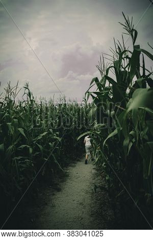 Young Boys Lost In Spooky Summer Corn Maze Run, Chasing And Playing In Labyrinth Adventure With Mood