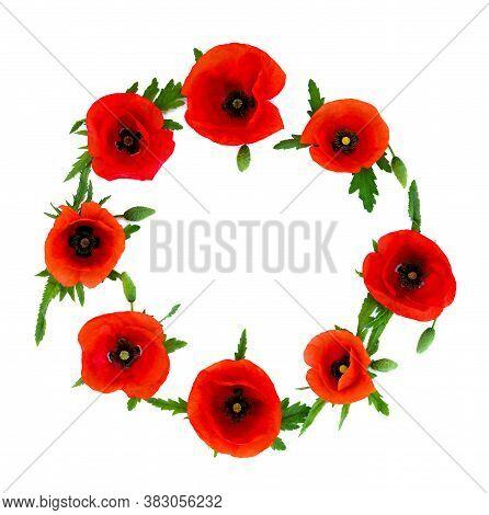 Wreath Of Red Poppies ( Common Names: Common Poppy, Corn Poppy, Corn Rose, Field Poppy, Flanders Pop