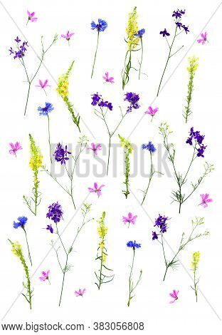 Wildflowers: Cornflower (centaurea Cyanus), Linaria Vulgaris (common Toadflax), Consolida, Cornflowe