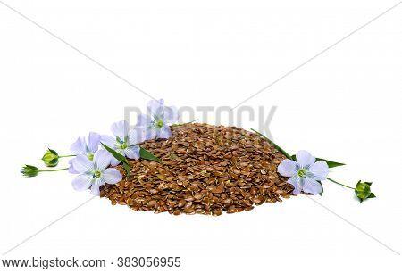 Flaxseeds, Flowers And Capsule Flax On White Background. Binomial Name: Linum Usitatissimum, Common