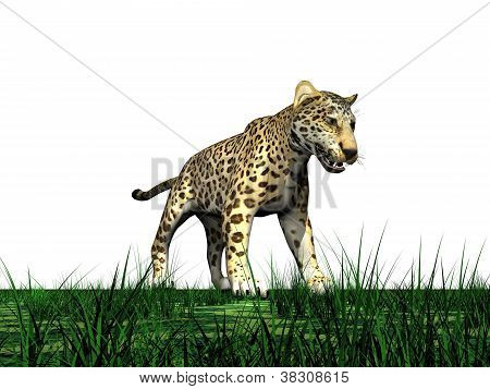 Panther standing in the green grass in white background poster