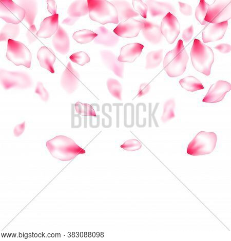 Pink Sakura Petals Confetti Flying And Falling Windy Blowing Background. Birthday Card Backdrop. Spa