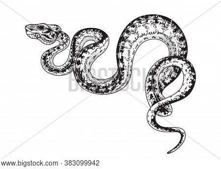 Hand Drawn Creeping Garden Tree Boa Isolated On White Background. Vector Monochrome Winding Spotted