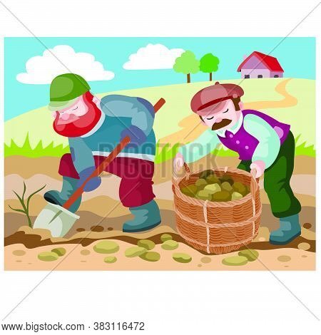 Two Peasants In The Field Dig Potatoes And Harvest Their Crops In A Wicker Basket, House, Ranch, Far