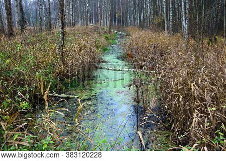 Wetland In The Forest In The Autumn Morning