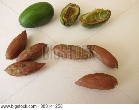 Nuts From The Japanese Torreya,  Torreya Nucifera