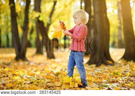 Little Boy Having Fun During Stroll In The Forest At Sunny Autumn Day. Child Collect Maple Leaves. I