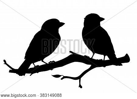 Realistic Sparrows Sitting On A Branch. Monochrome Vector Illustration Of Black Silhouettes Of Littl