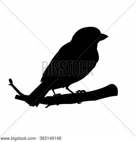 Realistic Sparrow Sitting On A Branch. Stencil. Monochrome Vector Illustration Of Black Silhouette O