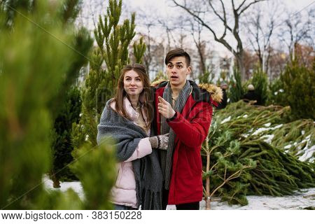A Lovely, Young Couple Is Having Fun Choosing A Christmas Tree For Home At The Christmas Tree Market