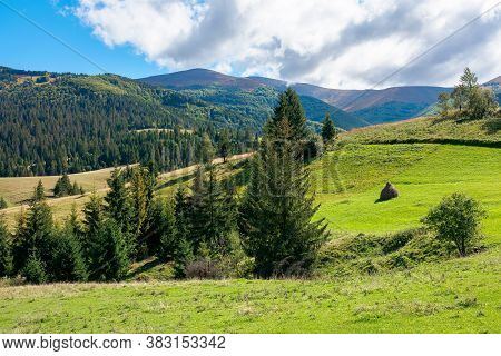 Rural Fields On Rolling Hills In Green Grass. Trees On The Meadows. Mountainous Countryside Landscap