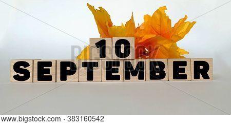 September 10.september 10 On Wooden Cubes On A White Background.autumn Leave .calendar For September