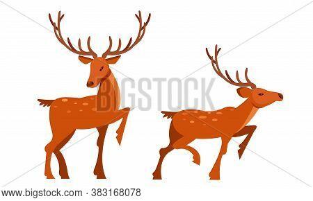Brown Deer With Antlers And Slender Legs In Standing Pose Vector Set