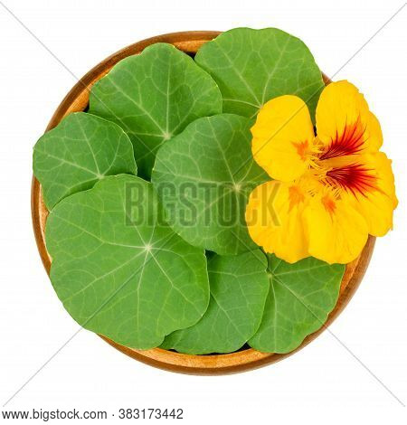 Garden Nasturtium, Rounded Leaves And Bright Yellow Flower In A Wooden Bowl. Tropaeolum Majus, Also