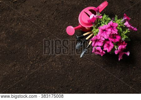 Flat Lay Composition With Gardening Tools And Flower On Soil, Space For Text