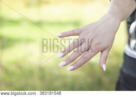 Female Hand With Professional Female Manicure With Natural Perfect French Nails In Nature