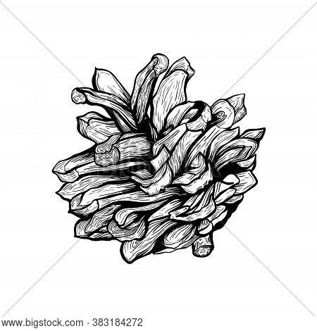 Pine Cone.christmas Tree Decoration. A Pine Cone. Hand Drawn Botanical Vector Illustration. Design E