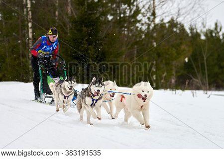 Verkhoshizhemye, Russia - 03.08.2020 - Husky Sled Dog Racing. Koltco Fortuny - Winter Dog Sport Sled