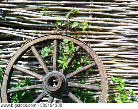 Close-up Fence Made Of Wooden Rods With Ivy Sprout And An Old Wooden Wheel. Wicker Fence Made Of Twi