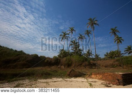 Tropical Scenery With Pal Trees And Blue Sky. Goa, India