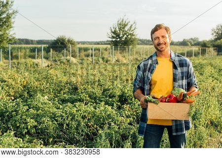 Rancher In Plaid Shirt Holding Box With Fresh Vegetables While Standing On Plantation