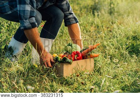 Partial View Of Rancher In Rubber Boots Touching Box Full Of Ripe, Fresh Vegetables