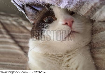 Oddly Looking Cute Cat Hiding One Eye Behind The Terry Blanket