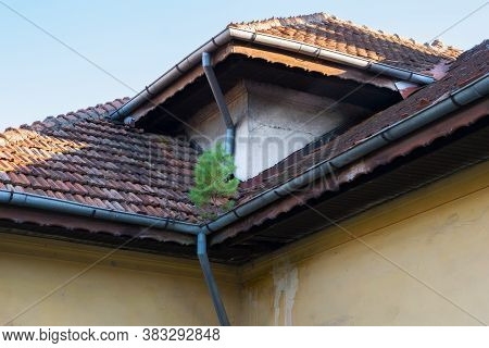 A Small Pine Tree Is Growing In The Gutter Of A Neglected House Roof