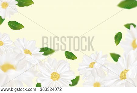 Beautiful Chamomile Background For Your Text Or Banner. White Blooming Chamomile. Banner For Beauty