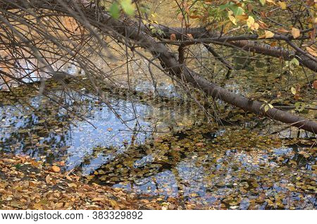 Autumn Park On A Warm Sunny Day. A Tree Branch Bent Over The Water. The Blue Sky Is Reflected In The