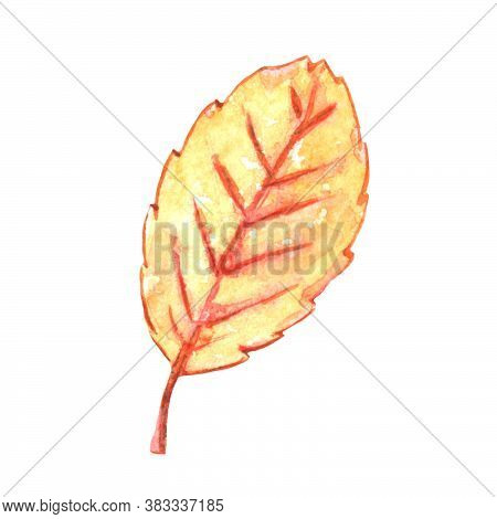 Watercolor Illustration Of An Aspen Leaf. Nature Design Elements Isolated On A White Background.