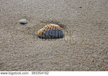 Orange And White Seashell Tucked Into The Sand On A Sunny Day