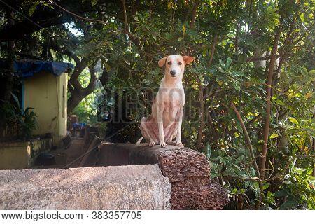 Close-up Of Dog Sitting On Ledge In Goa, India