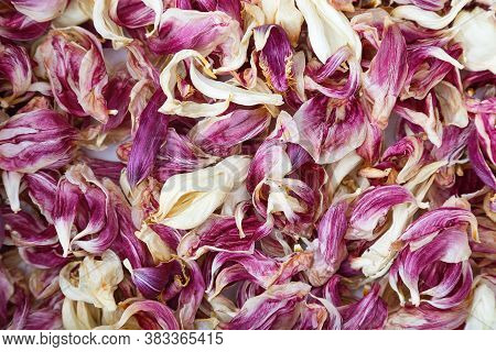 Natural Background Of Dry Petals Of Red Tulips. Herbarium Of Petals. Many Dried Petals.