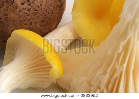 Shittake And Yellow Oyster Mushrooms
