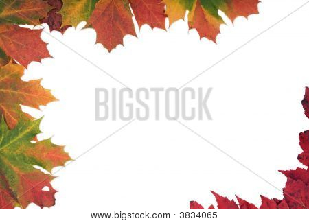 Multi Coloured Autumn Leaf Frame