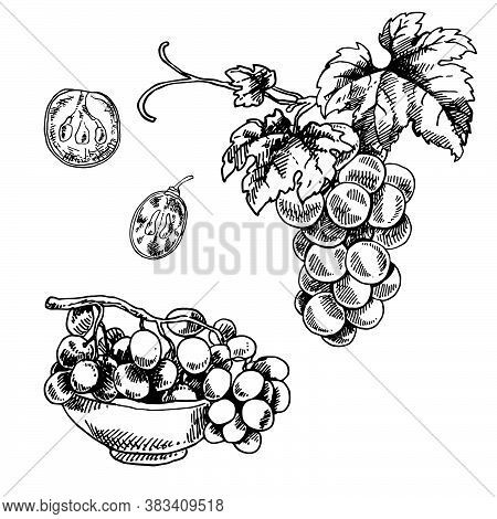 Hand Drawn Vector Illustration Of Bowl Of Grapes, Grape Bunch And Grape Slice. Isolated Black Branch