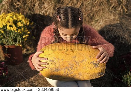 Fall Holidays. Small Kid And Pumpkin On Sunny Day Outdoors. Collecting Pumpkin Harvest. Pumpkin Time