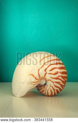 Nautilus, Nautilus Pompilius, Shell Against An Aqua Blue Green Background In A Decorative Shelf.
