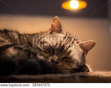 Close Up Of Beautiful Sleeping Cat. Close Up Of Beautiful Sleeping Cat.