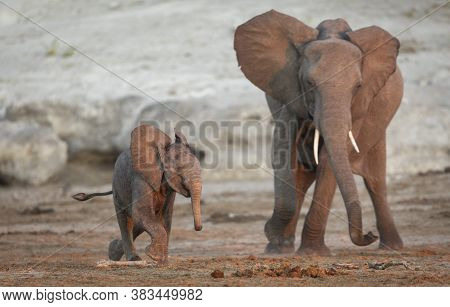 Mother And Baby Elephant Playing In Dry Riverbed In Chobe River In Botswana