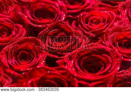 Bouquet Of Flowers, Fresh Red Rose. Collage Of Red Roses. A Close Up Macro Shot Of A Red Rose. Flowe