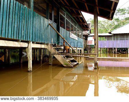 Amazon River / Peru - 10 May 2011: The Monkey In Amazon River, Peru, South America