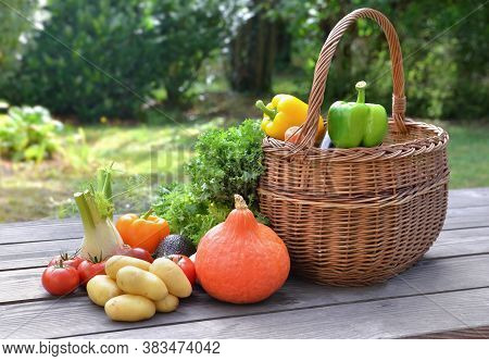 Various And Colorful Vegetables Put On A Table Next To A Basket In Garden