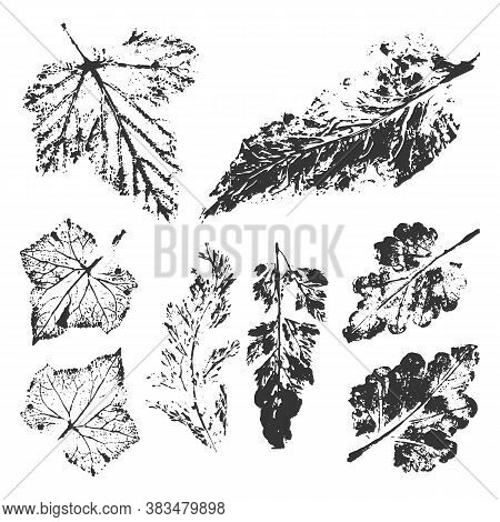 Set With Stamp Leaves, Plant Imprint. Leaf Ink Print Collection. Objects Isolated On White. Vector M